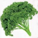 English_parsley