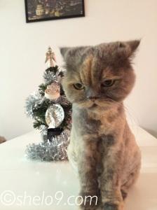 Merry Christmas from Jasmine